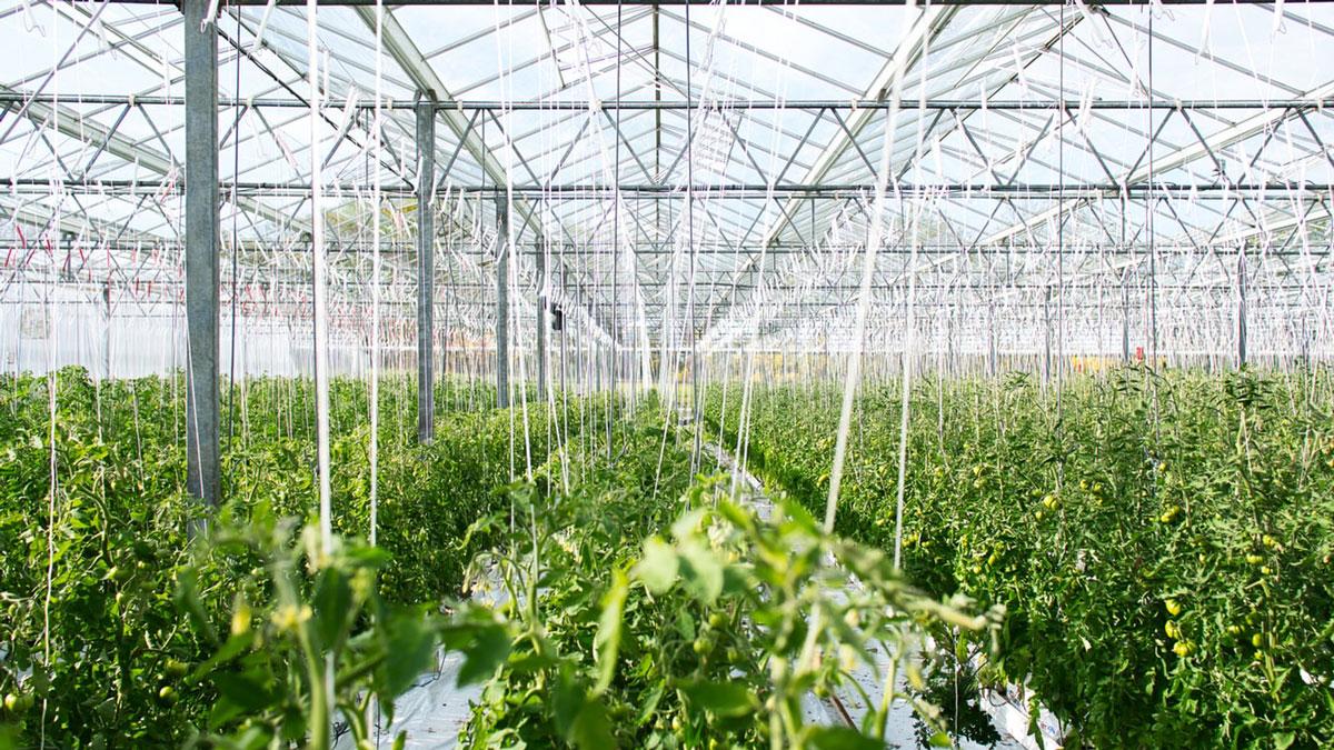 Apps to Manage Your Marijuana Farm GP